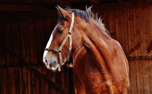 spiritual companion horse
