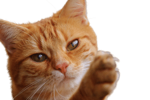 cat communication helps with grief
