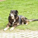 dog-22771_1280