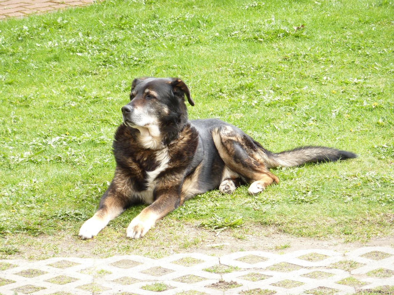 Paws before Dying, caring for your senior pet through their golden years and beyond