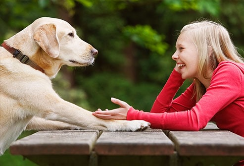 How to Talk to Animals: Beginning Core Foundations Course