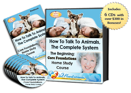Beginning Animal Talk Course