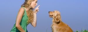 communicating with animals helps solve problems
