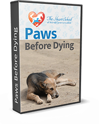 paws-before-dying