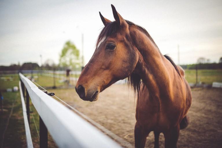 horse communication