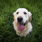 pet-food-blog-post