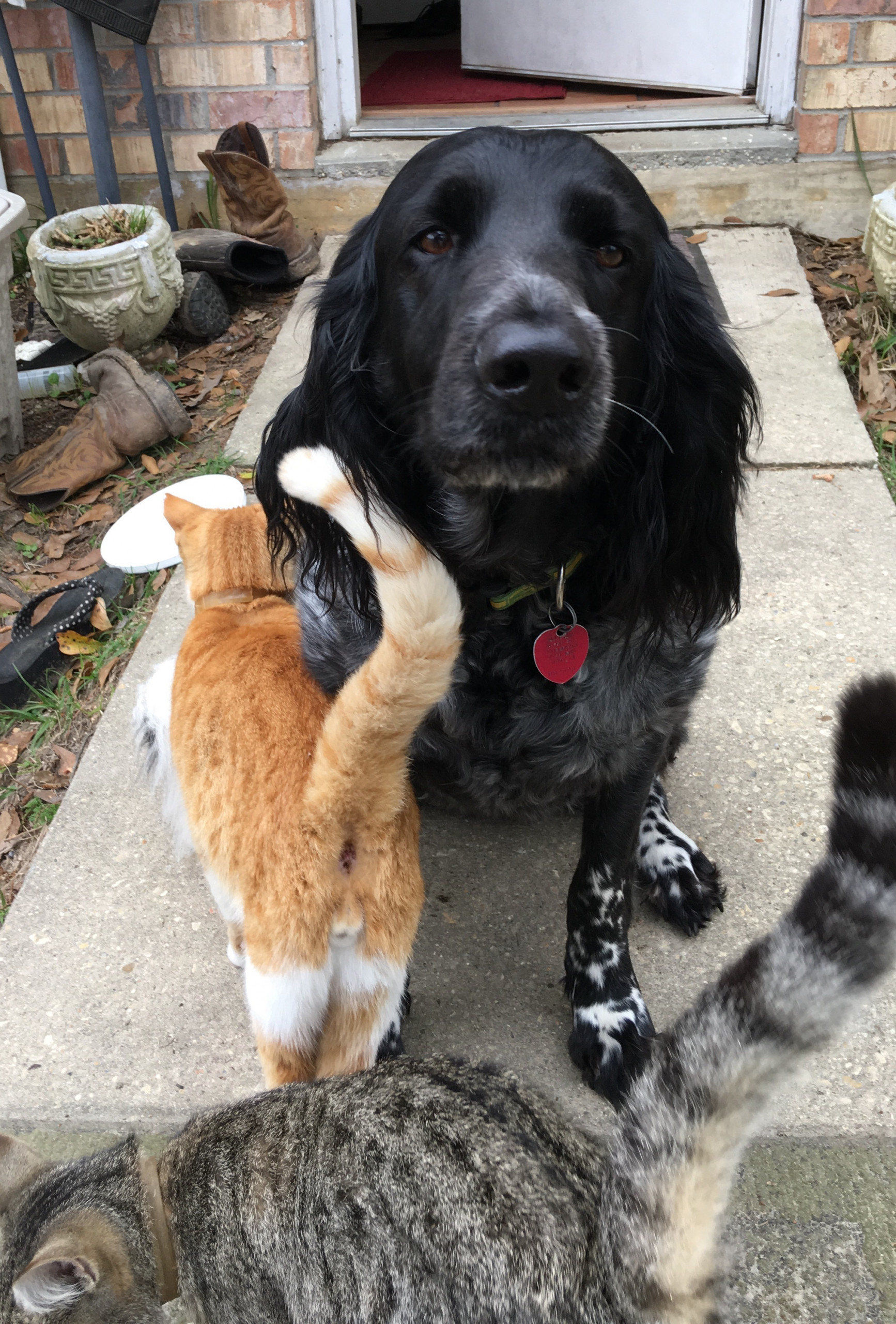 animal communication dogs and cats talk too