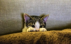 cat communication and noise phobias
