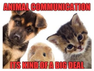 animal communication pets