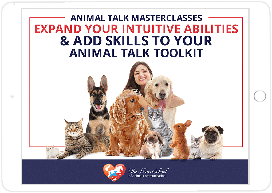 Animal Talk Masterclass Series