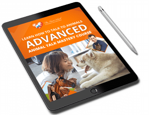 Advanced Animal Talk Mastery Course png