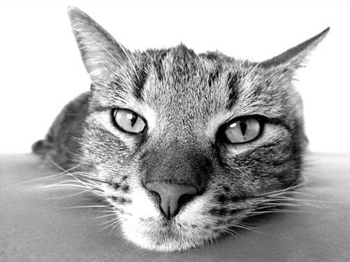 cat-img2
