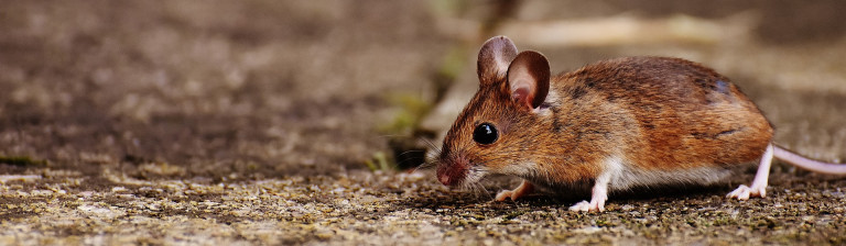 What Can We Learn From Animals? Big Lessons From a Small Creature