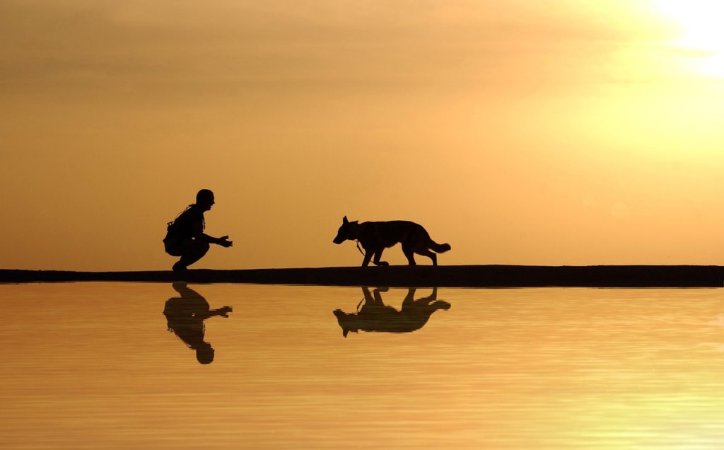 How Animal Connection Can Heal Our Own Wounds and Trauma