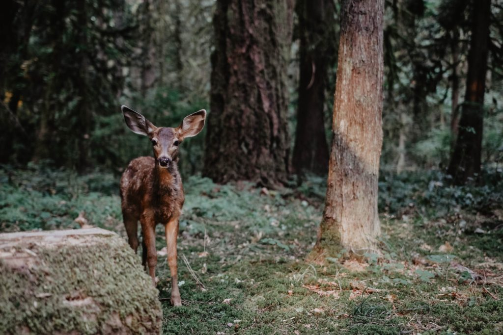 Fawn: Talk to Animals and Watch the Amazing Results!