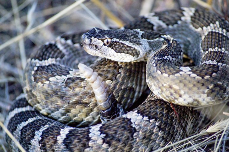 Talking With Animals: My Conversation With Grandfather Snake