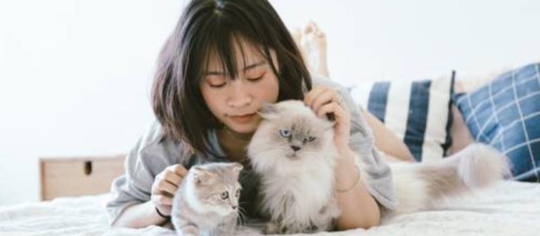 how to keep indoor cat happy