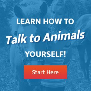 Learn How to Talk with Animals