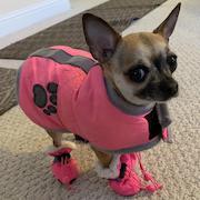 Priscilla-BarbG pink