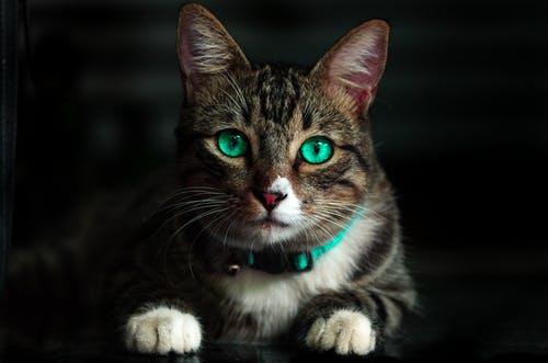 cat communication