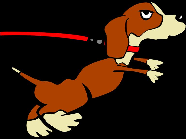 stubborn dog
